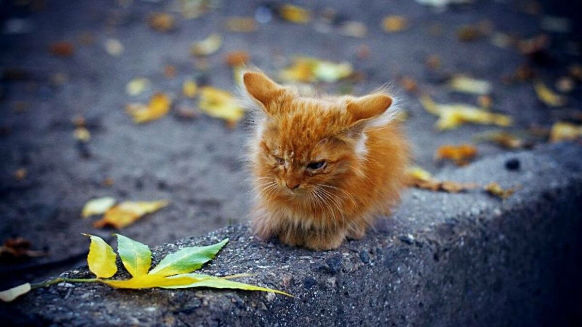 Уходи котенок картинка