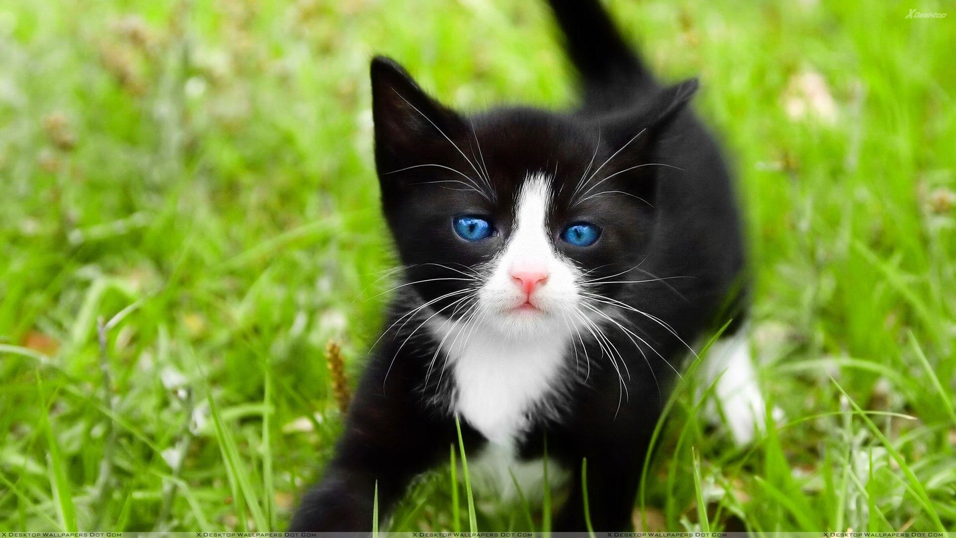Blue Marbles Cats Beautiful Cats Black And White Kittens