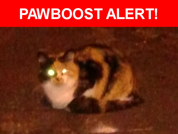 Pin On Lost Pet
