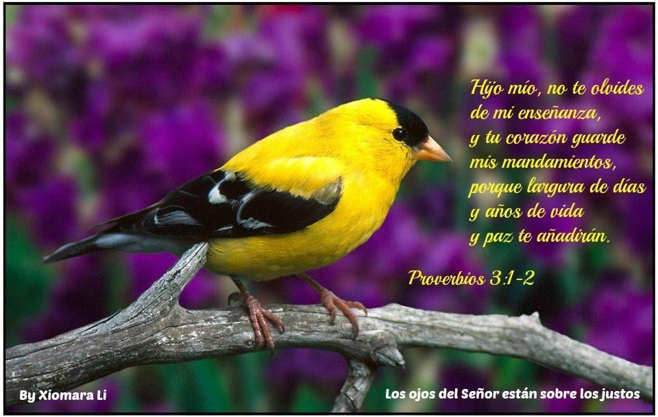 Los ojos del Señor están sobre los justos...Proverbios 3:1-2