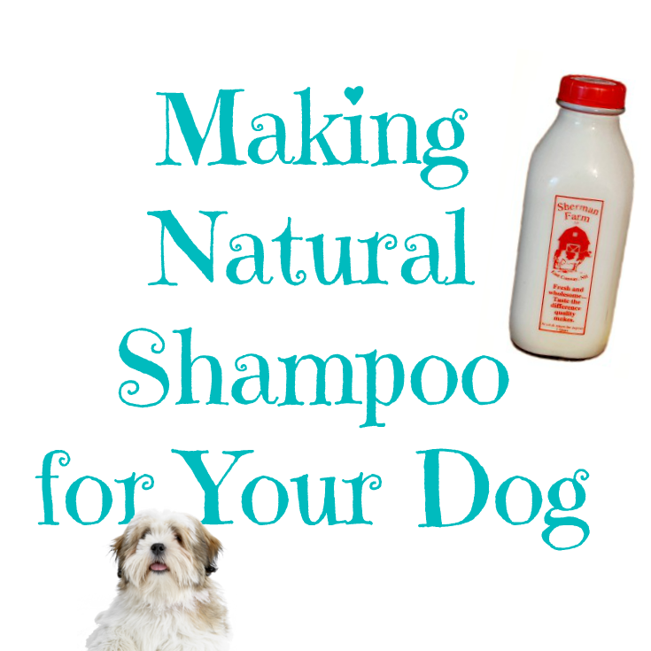 do you have a stinky pup animals fish fowl diy dog shampoo pets flea shampoo for cats. Black Bedroom Furniture Sets. Home Design Ideas