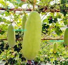 Asian Winter Gourd - A Rare & Delicious Gourd/Melon from South-east Asia #plants... - #asian #delicious #gourd #melon #south #winter - #Katheryn'sAsiaGarden #wintermelon Asian Winter Gourd - A Rare & Delicious Gourd/Melon from South-east Asia #plants... - #asian #delicious #gourd #melon #south #winter - #Katheryn'sAsiaGarden #wintermelon