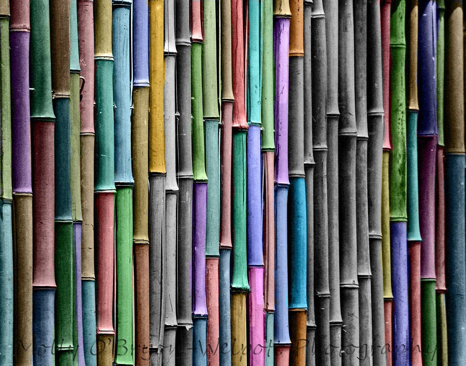 Black And White Fine Art Print Bamboo With Selective Rainbow
