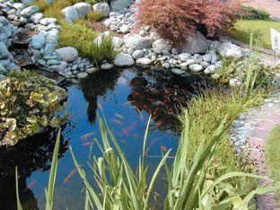 Puutarha-altaan hoito ja levänpoisto - Suomela - Jotta asuminen olisi mukavampaa