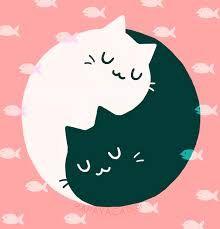 Resultado de imagen de yin yang cats