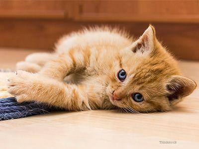 How Do I Trim My New Kitten S Nails Most Beautiful Cat Breeds Kittens Kittens Cutest