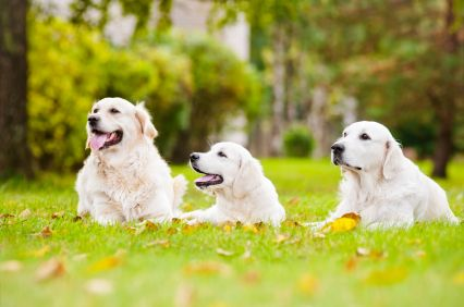 Tips For Moving Cross Country With Pets Moving Cross Country Pet Relocation Pets