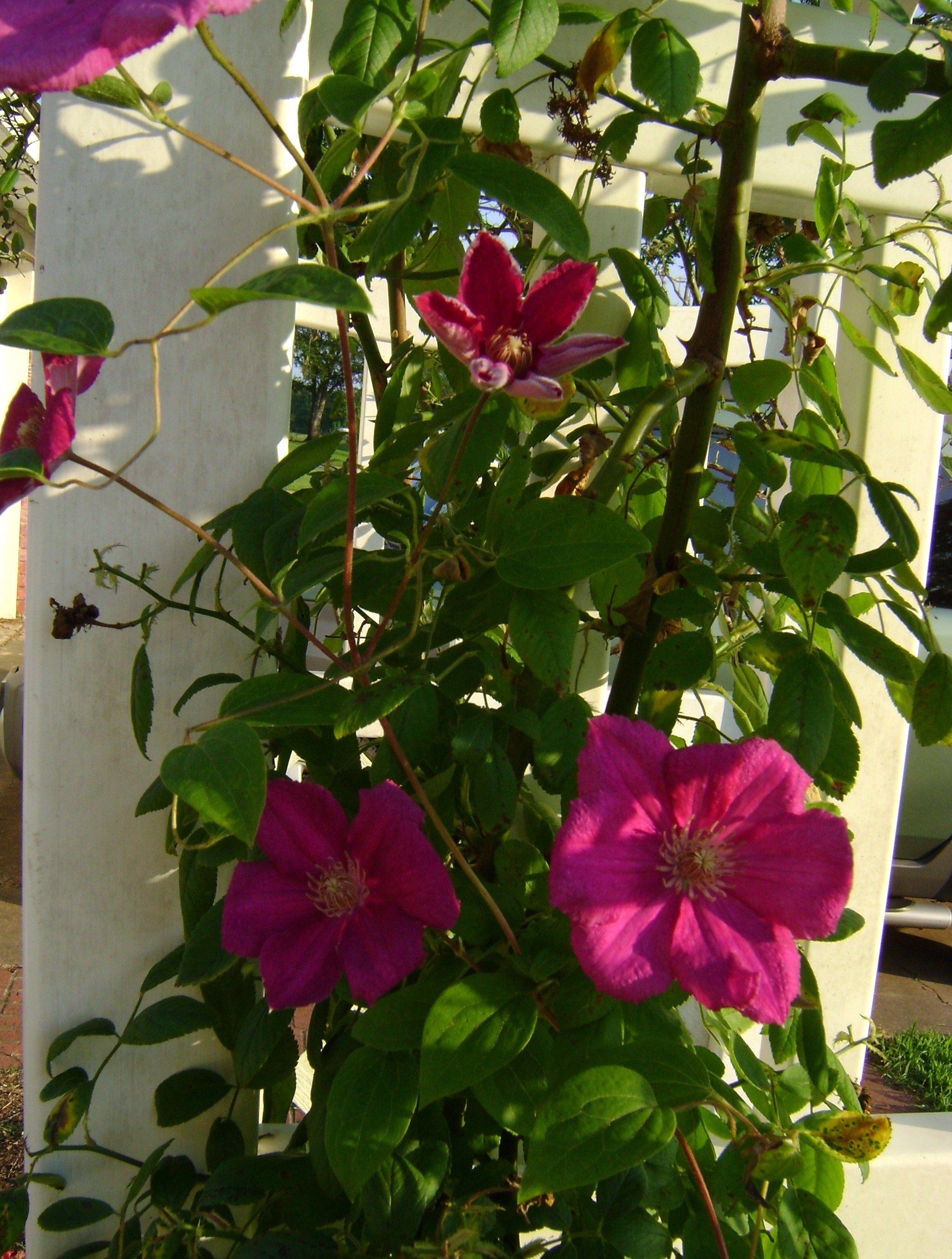 vines on pinterest - photo #4