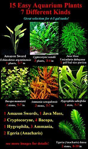 15 Live Aquarium Plants 7 Different Kinds Amazon Sword Java Fern Hygrophila And More Great Plant Sampler Fo Planted Aquarium Live Aquarium Plants Plants