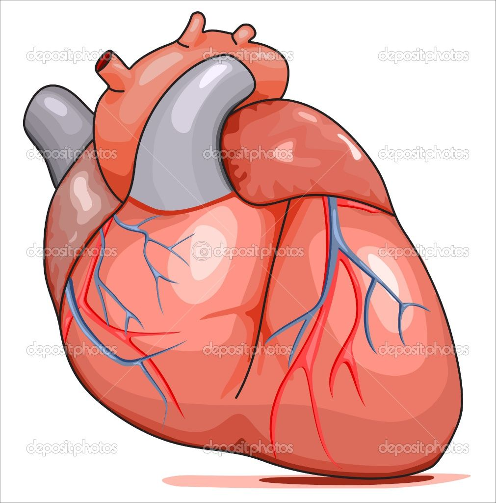 Cartoon Human Heart Clip Art Clipart Best Simple Brain Diagram
