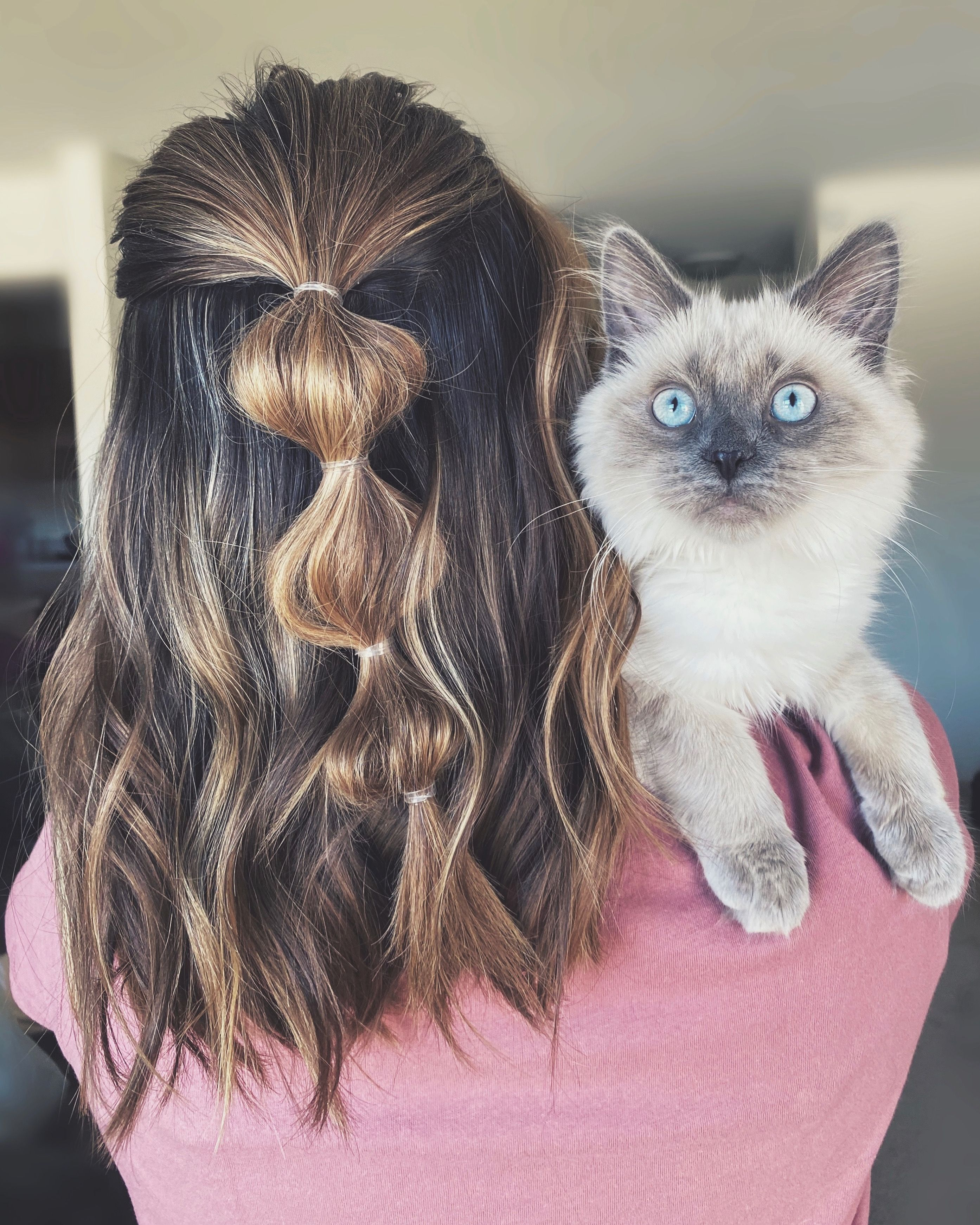 20++ Cat with bob haircut inspirations