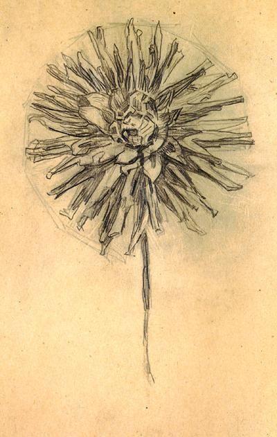 Piet Mondrian, Chrysanthemum, 1908