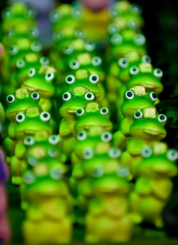 Frogs eyes (via Roberto Cumsille)