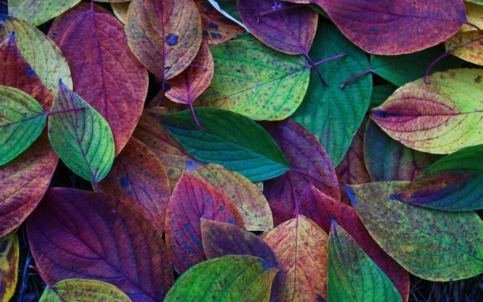 Autumn Leaves Green Purple Red Wallpaper Colorful Leaves Leaves Jewel Tone Art