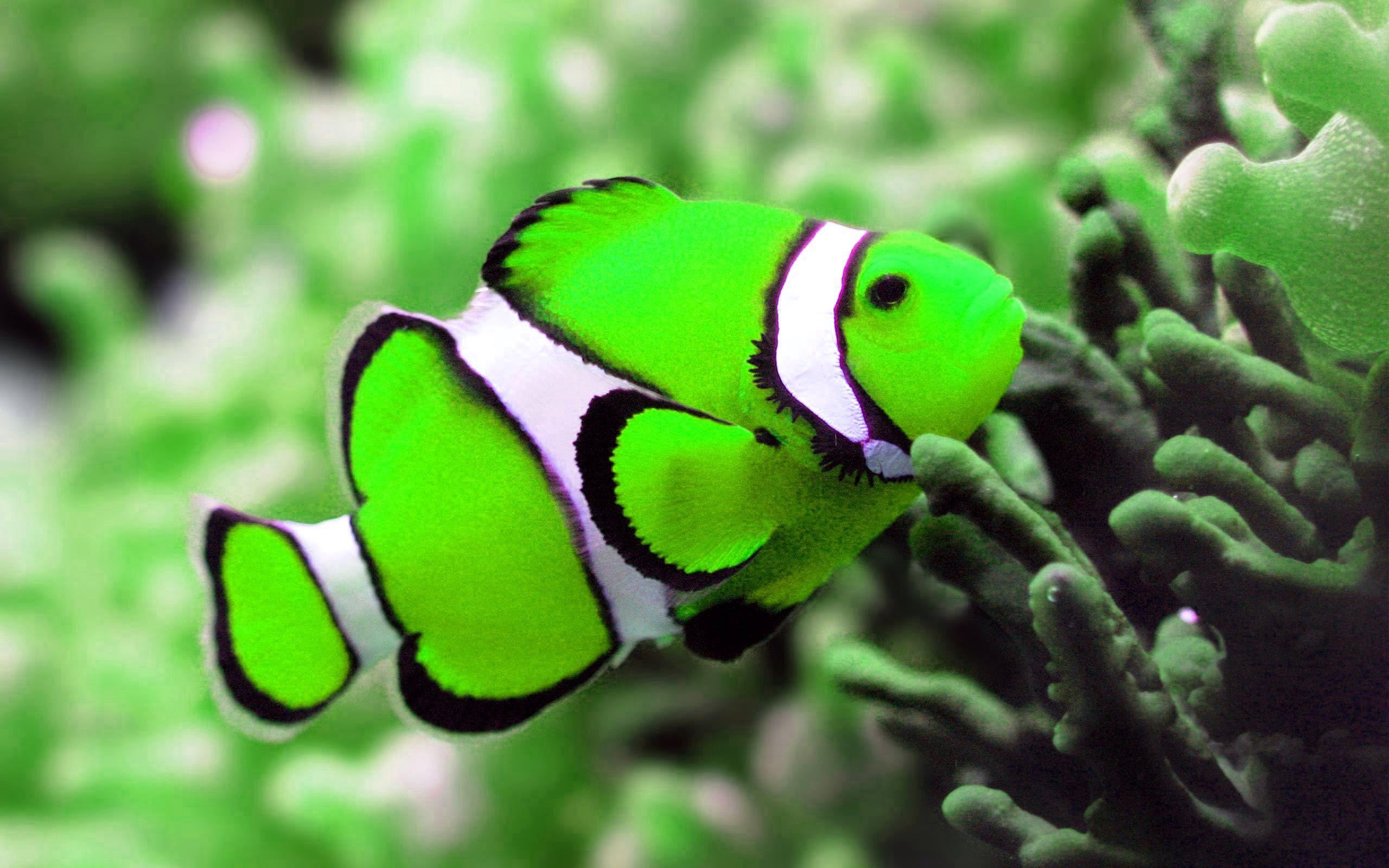 Pin by EriNa on WaterWorld | Pinterest | Princess fiona, Fish ...