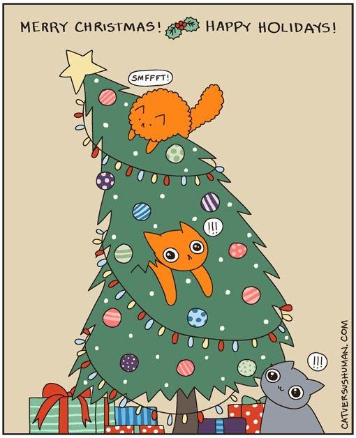 Cat Versus Human Christmas Cats Fancy Cats Cat Vs Human