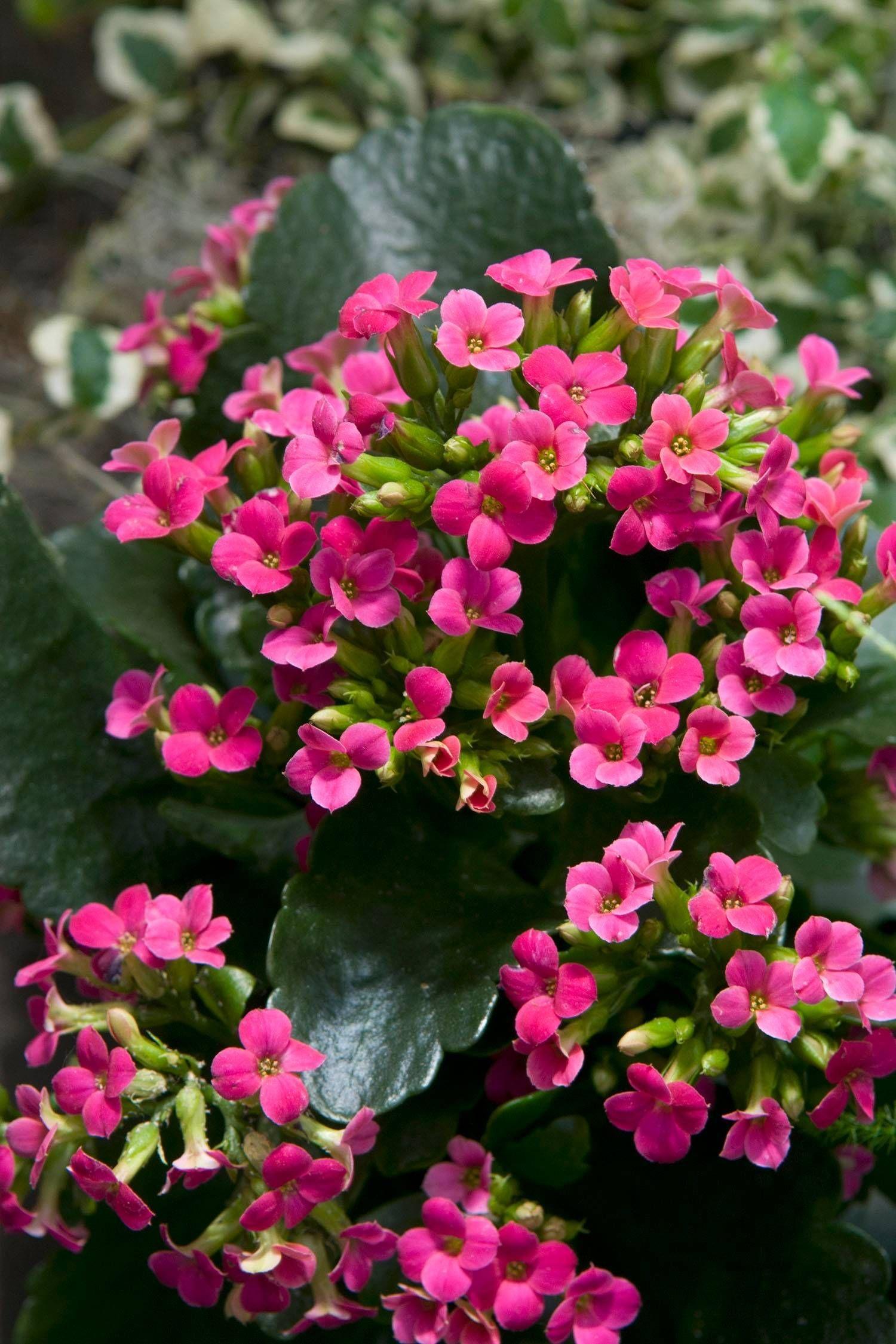 Succulent Houseplant Delivers Indoor Color Plants House 400 x 300