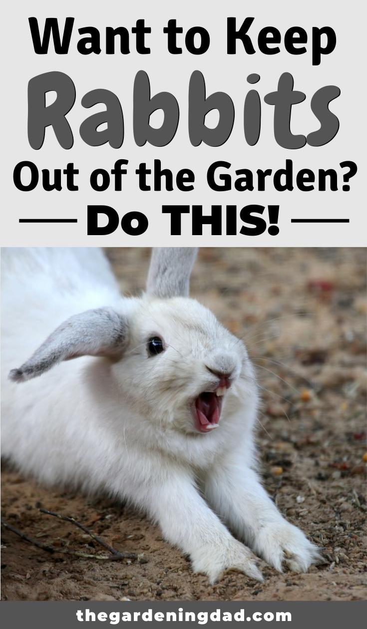 How To Keep Rabbits Out Of Garden 20 Easy Tips The Gardening Dad Rabbit Resistant Plants Rabbit Garden Rabbit Repellent