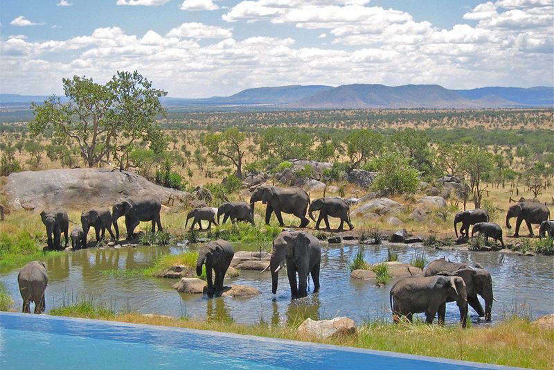 Photo Courtesy Of Four Seasons Safari Lodge Serengeti Safari Lodge Serengeti African Safari
