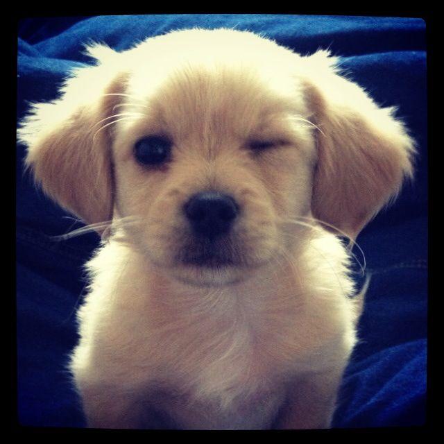 Smile! #puppy #smile