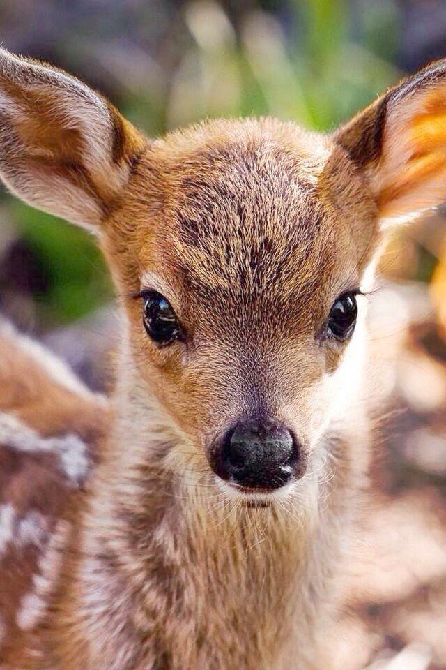 Cute Animals Names Cute Animals Ever Cute baby animals