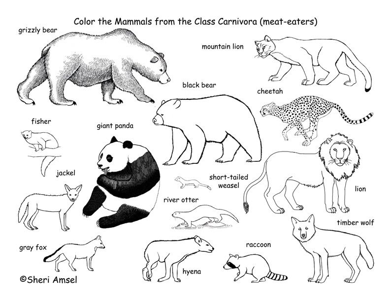 Educational Coloring Pages Http Translate Googleusercontent Com