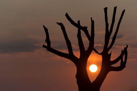 Aloe Silhouette - Richtersveld NP, Kokerboomkloof, Northern Cape, Richtersveld, South Africa [2010 © www.paulgodard.com]