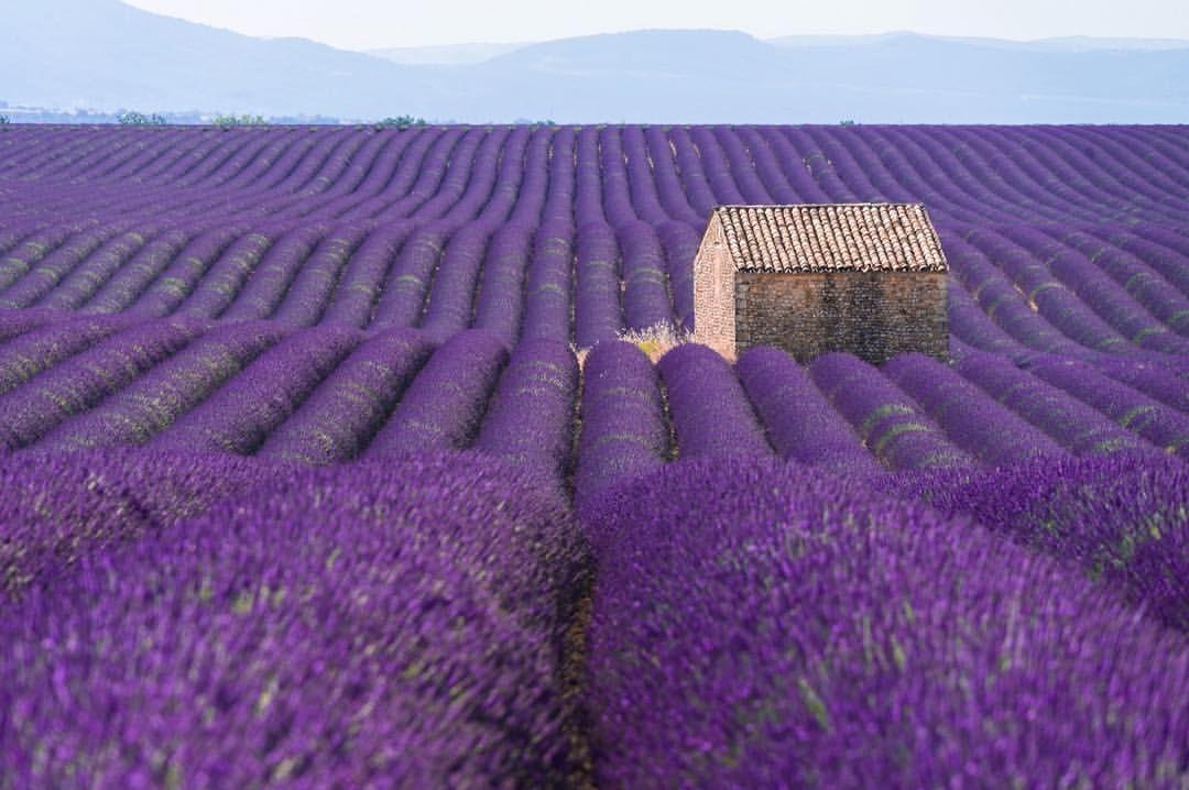 186 отметок «Нравится», 11 комментариев — Jacopo Manicardi (@ilmani1986) в Instagram: «#France #provence #valensole #ig_france #trip #travel #sun #flowers #nature #sky #sun #summer…»