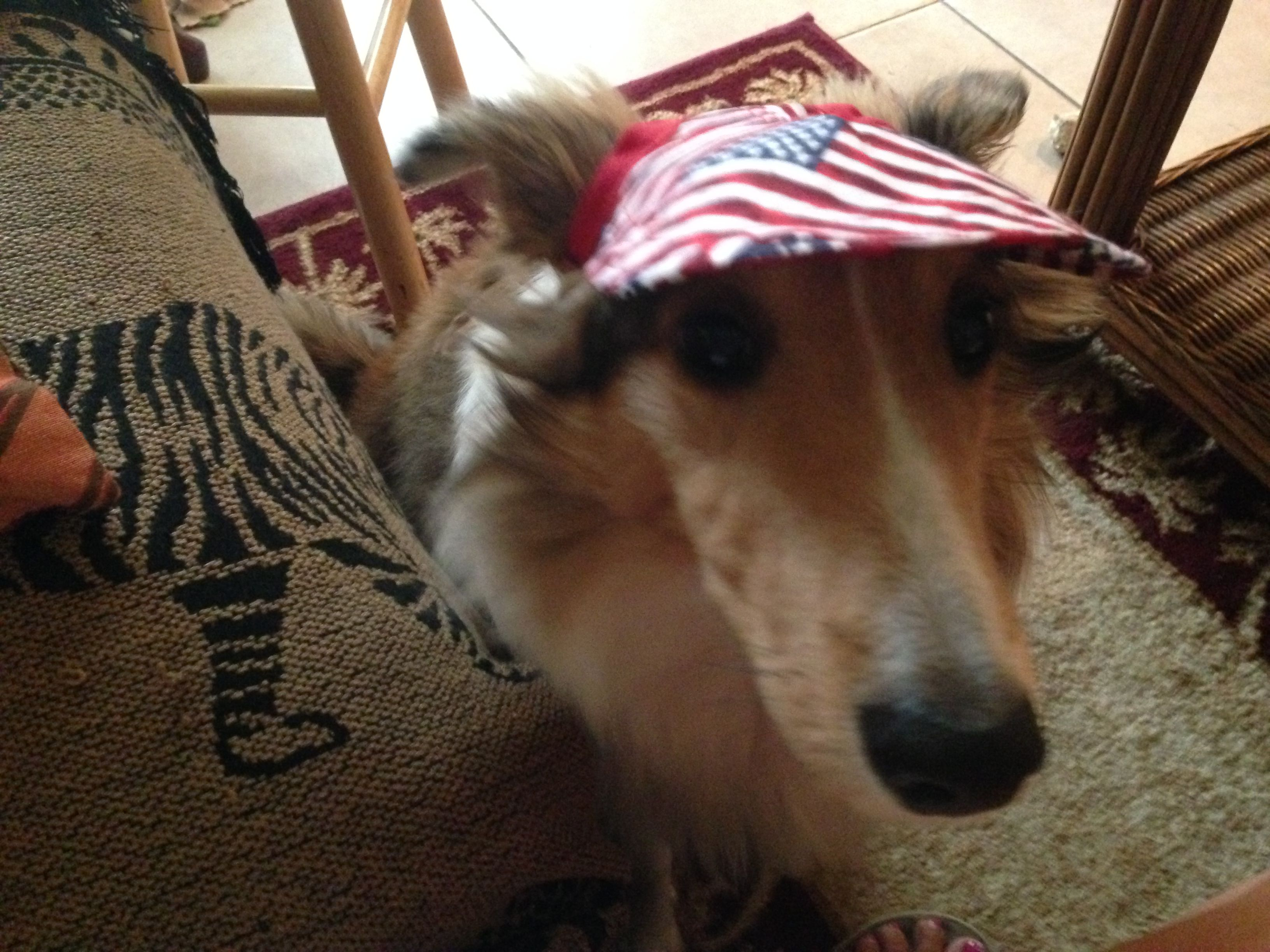 Calvin - Ready for the 4th of July!