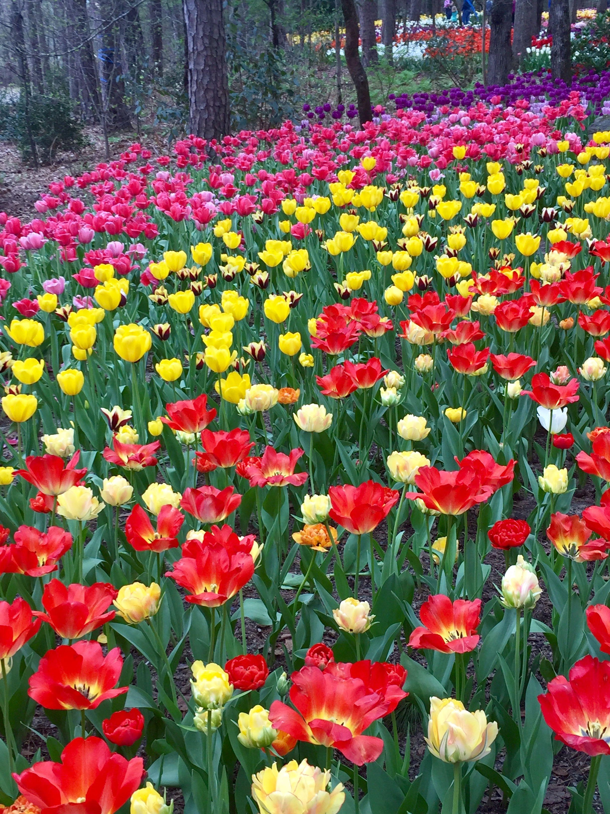 Garvin Gardins Hot Springs Ar 32418 Family Trip To Tulip