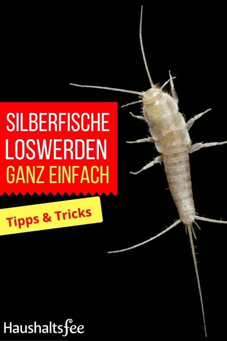 Silberfische Bekampfen Beste Tipps Tricks Tipps