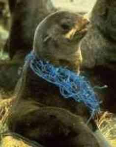 Restos de redes e linhas de pesca abandonados no mar permanecem no ambiente matando
