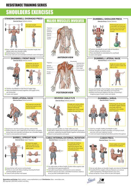 SHOULDERS Exercises http://develfitness.com/ | Biceps ...