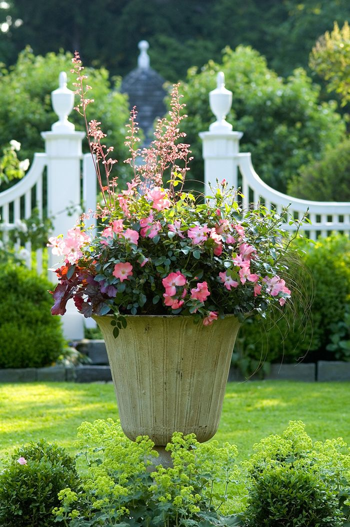 Urn Container garden Flower Carpet Coral roses Heuchera