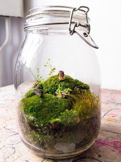 faire un terrarium guide pratique terrarium de conserve et bocal. Black Bedroom Furniture Sets. Home Design Ideas