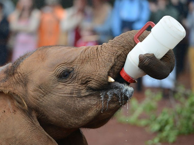 Image result for orphelinat éléphants nairobi