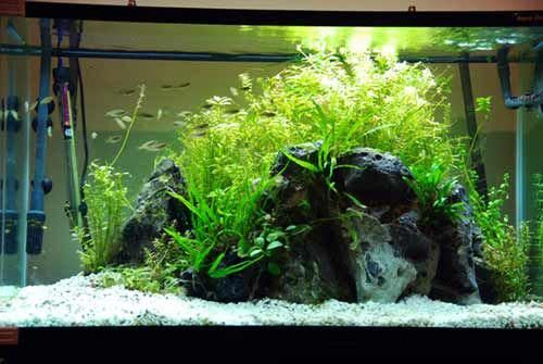 Amazing website with tons of aquascaping tips for ...