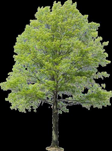 Trees Set2 155 Png Idei Ozeleneniya Risunki Duba Landshaftnye Plany