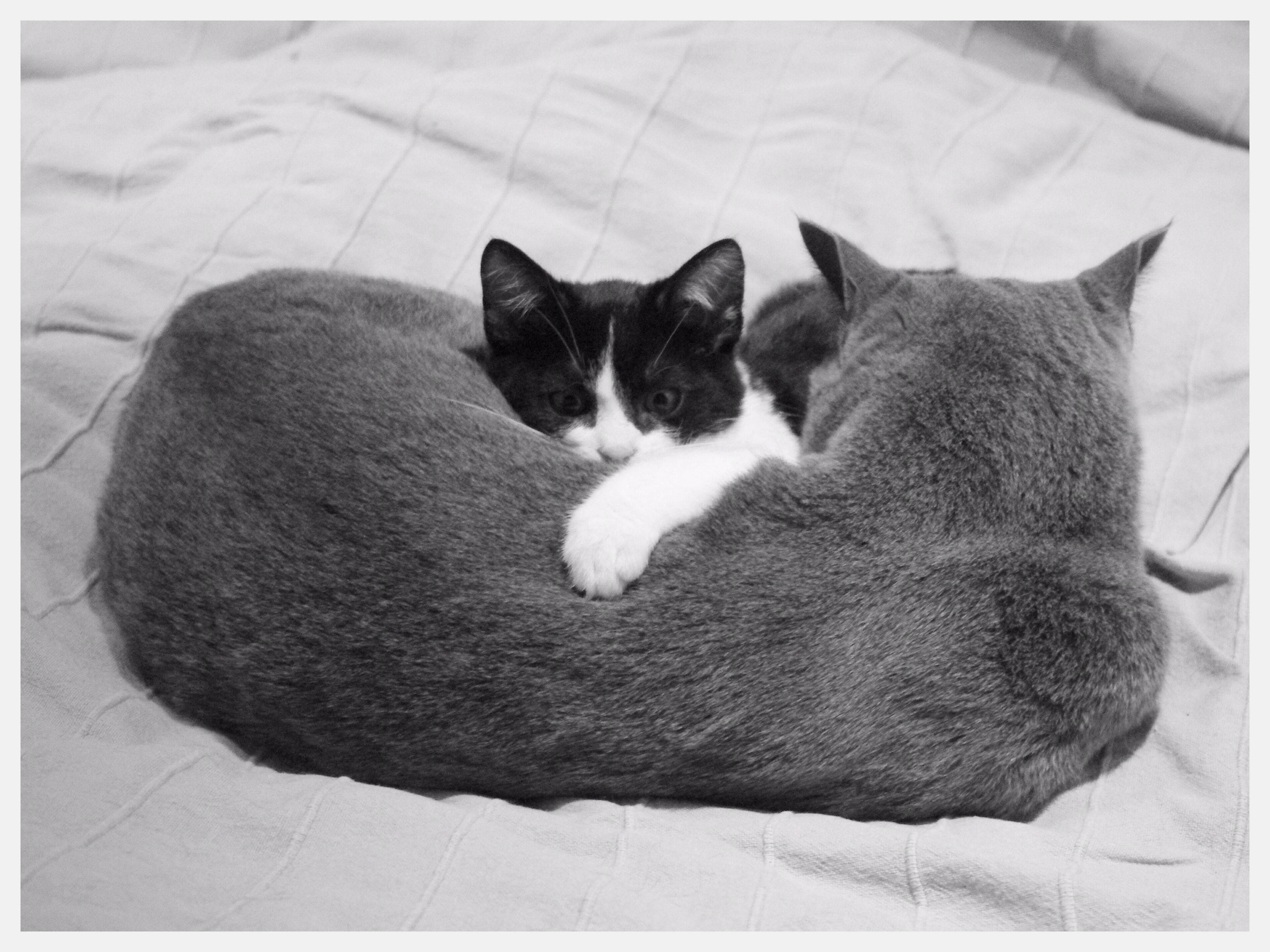 Baffo & Grey