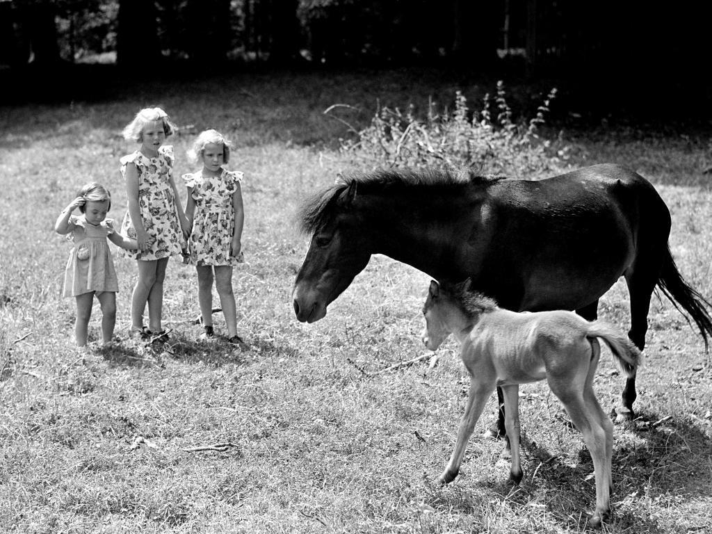 16 juli 1946 - Op Soestdijk is een pony geboren. De prinsesjes Beatrix, Irene en Margriet bewonderen de pony.