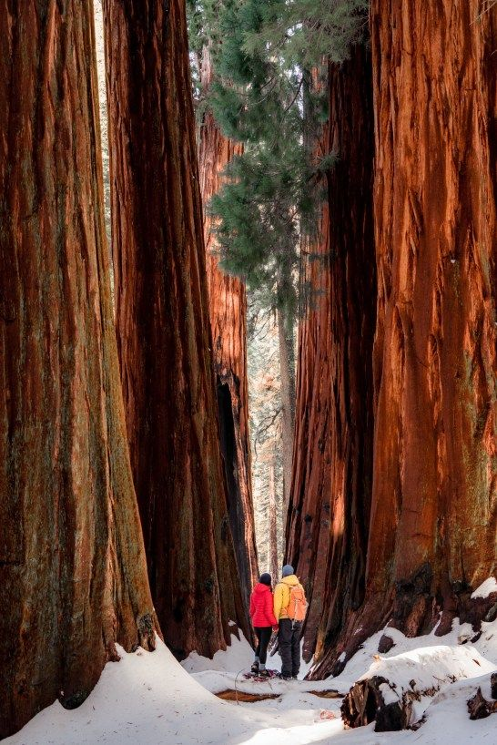 Photo of SEQUOIA NATIONAL PARK in WINTER | Helpful 2020 Guide