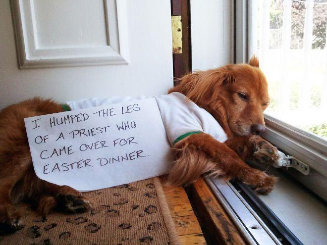 2020 Dog Shaming Calendar Is Here!
