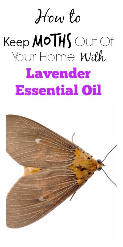 How To Keep Moths Out Of Your Home With Lavender Essential Oil