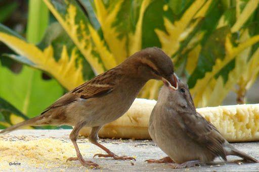 Recanto dos pássaros