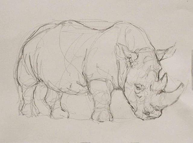 Line Drawings Of African Animals : Gestual de rinoceronte grafite #desenhogestual #gesturedrawing
