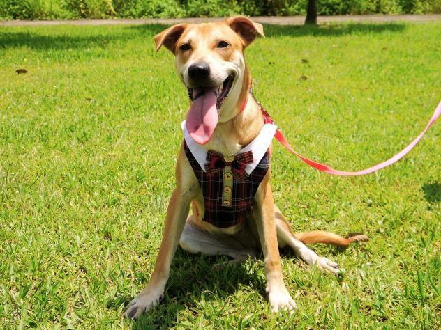 Adopt Cathy on Dogs, Labrador retriever mix, Retriever mix
