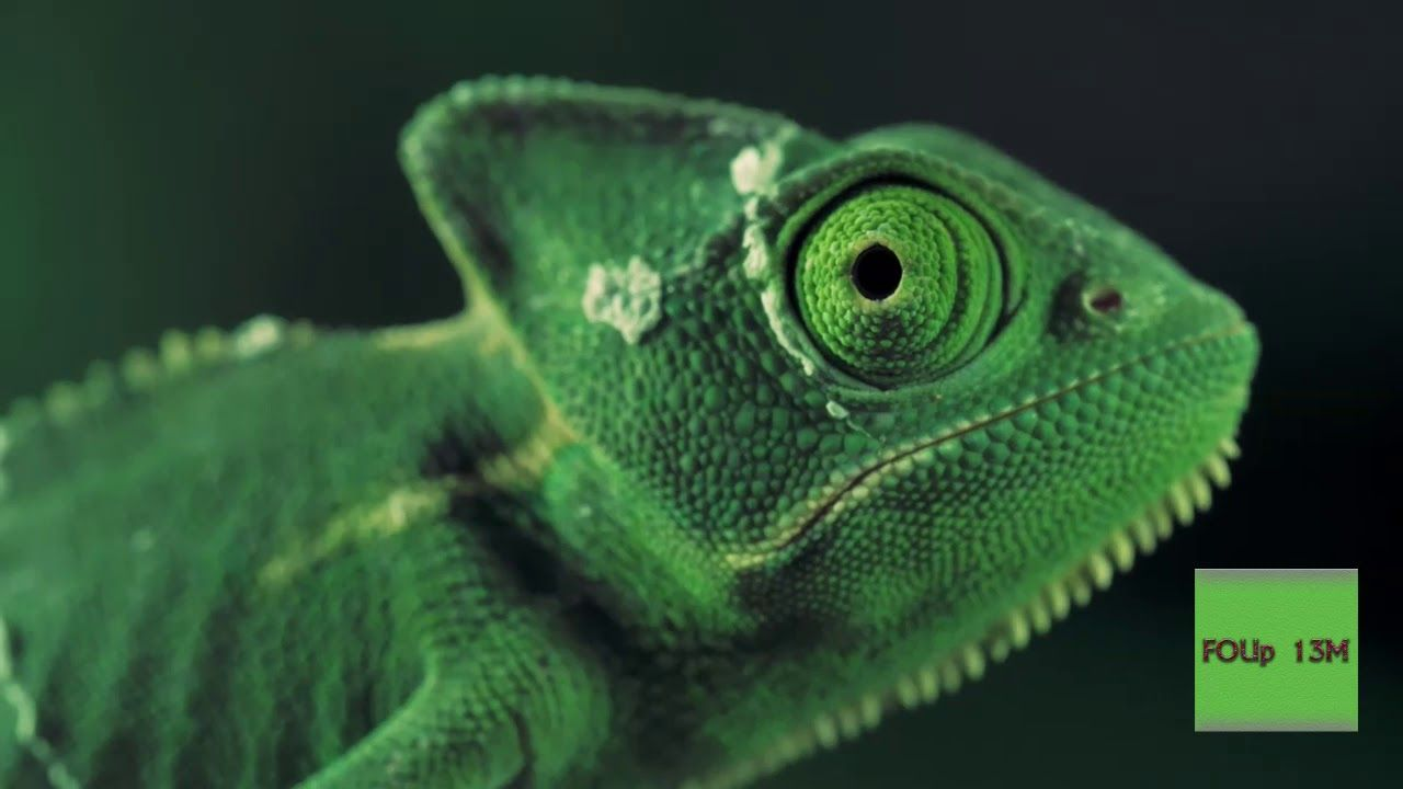 Picture Of Chameleon Changing Color