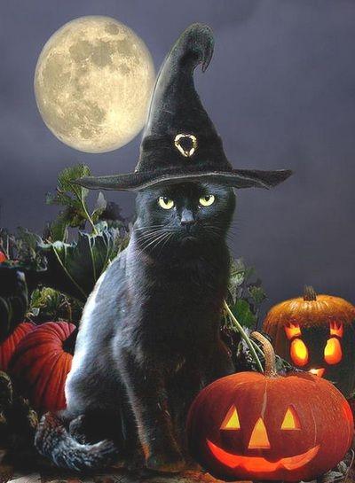Risultati immagini per samhain witches cats magic fantasy gifs