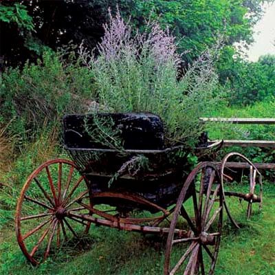planting in an old buggy