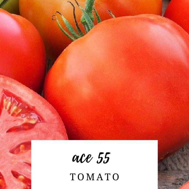 Tomato Ace 55-50 Seeds #3120